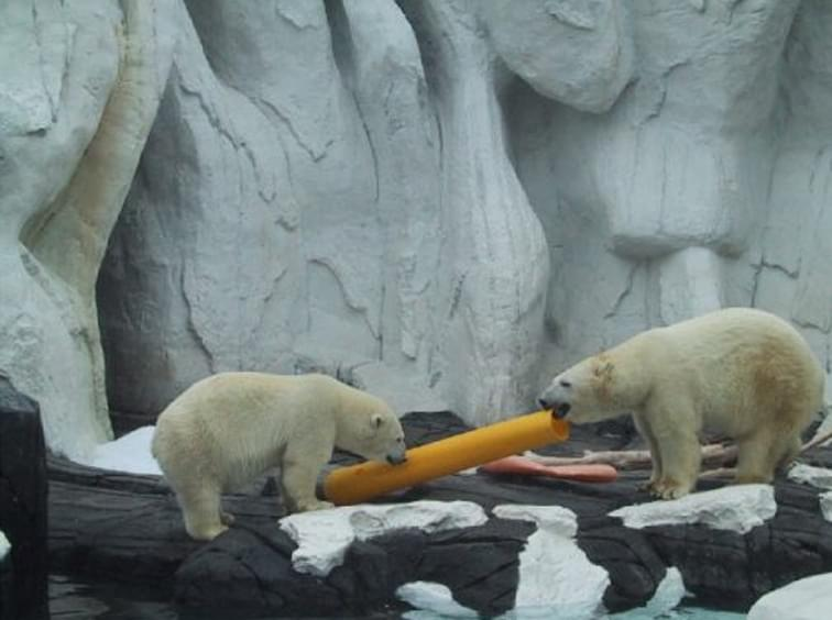 Ideal Shield's bollard cover being used as a feeding tube for polar bears